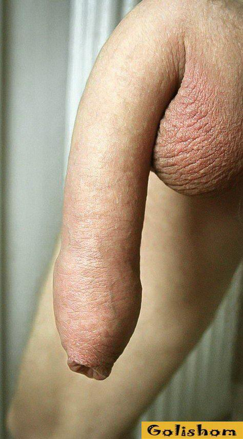 These are just pics of my fat cock always so horny for both cock and pussy